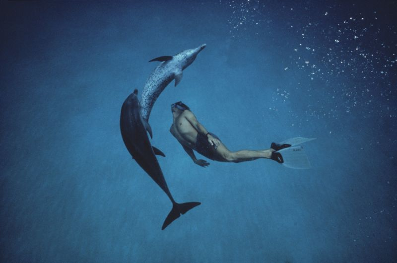 הדולפין -דוקומנטרי